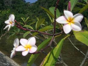 Wasserpflanzen (Kenh Ga)