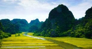 Reisfelder in der Nähe von Ninh Binh