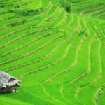 Bei gutem Wetter wirken die grünen Reisterassen noch kräftiger