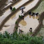 Die Arbeit auf den Reisterassen erfolgt bei jedem Wind und Wetter