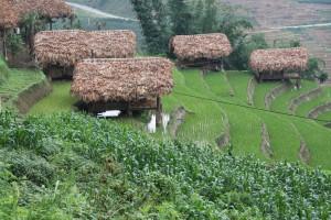 Sapa - Grüne Reisterassen soweit das Auge reicht