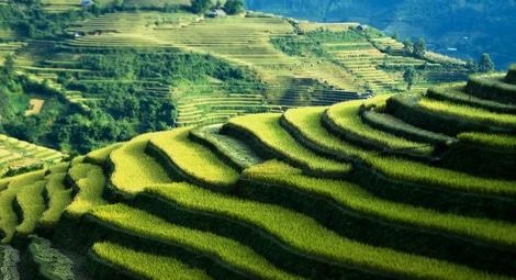 In Vietnam kann man Reisterassen an vielen Orten antreffen