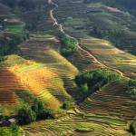 Die Reisterassen erstrecken sich über die gesamten Berge bzw. Hügel
