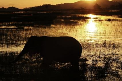 Die Natur von Vietnam bietet ein großes Spektrum an Abwechslung!