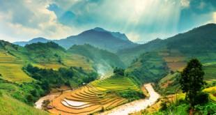 Reisterassen in Mu-Cang-Chai - eine interessante Alternative zu Sapa in der Region