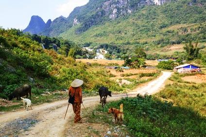Beim Backpacking kann man auch die ruhigeren Gegegenden von Vietnam gut erkunden...
